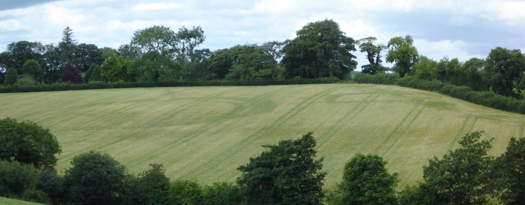 Crop Markings of Leveled Ringfort