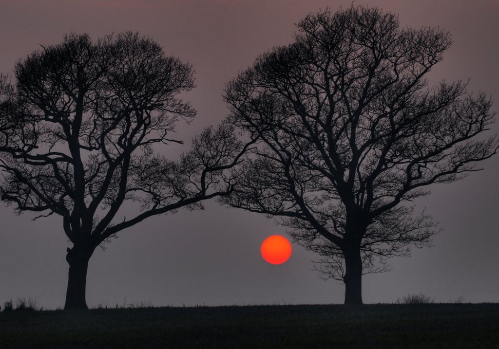 Two trees just before sunset