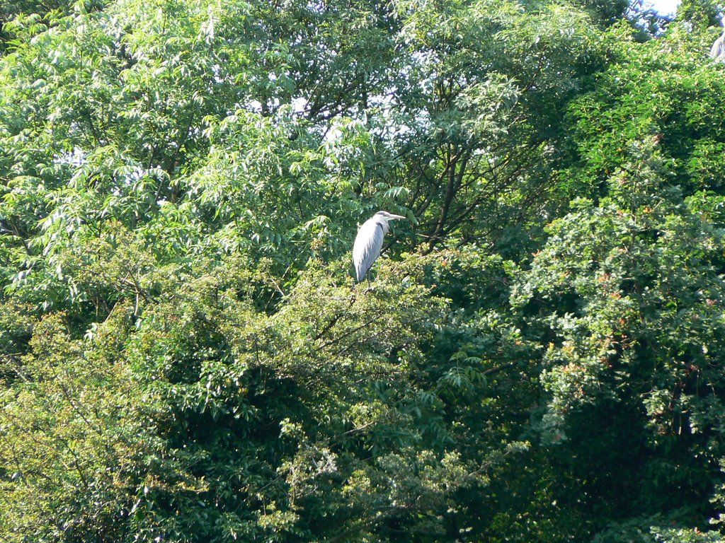 HERONS AT KINGS MILL SUTTON    o=k