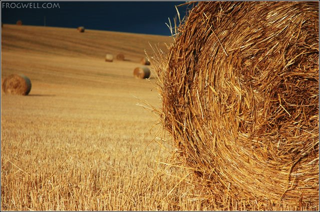 Bales of straw near Blairgowrie