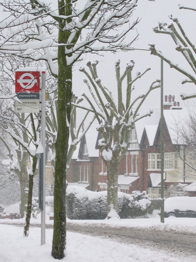 Oakwood Avenue in the snow