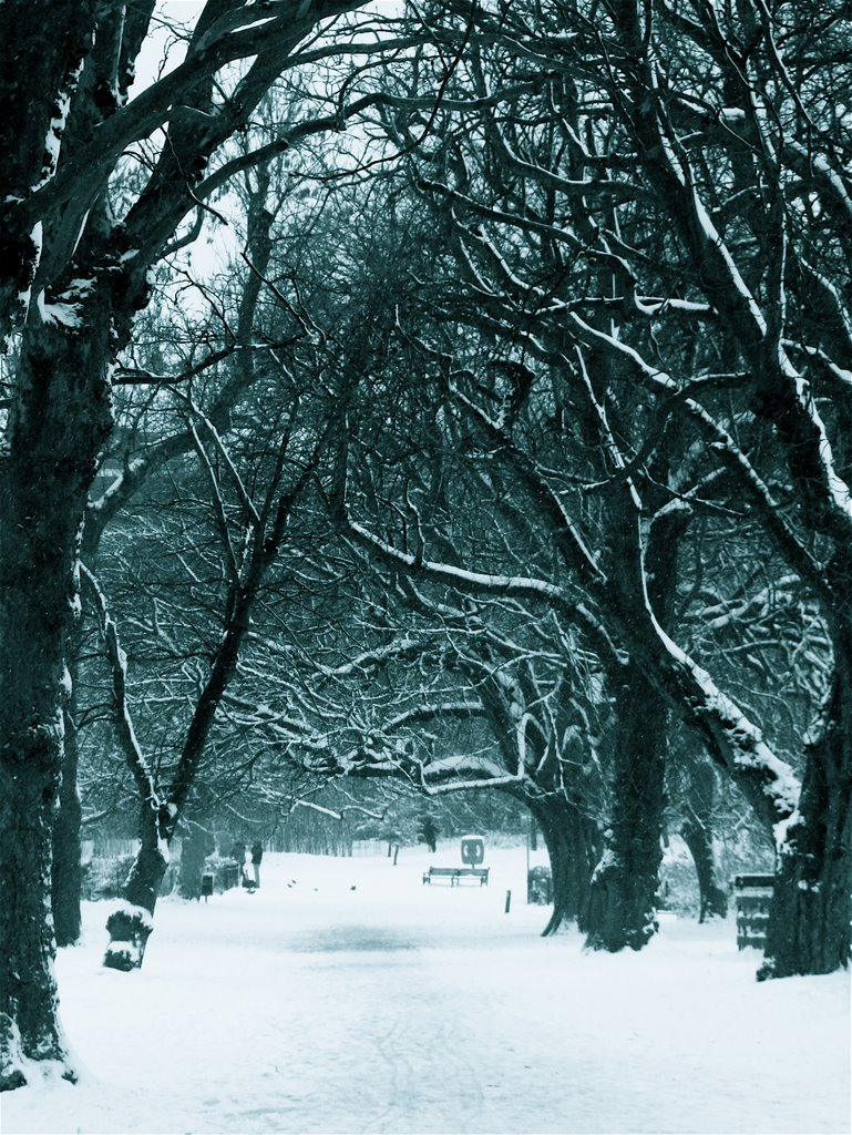 A snowy avenue of trees
