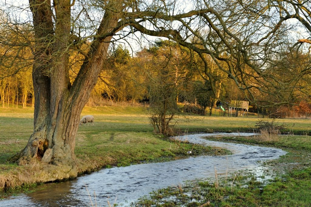 River Misbourne ~ S bend and Sheep