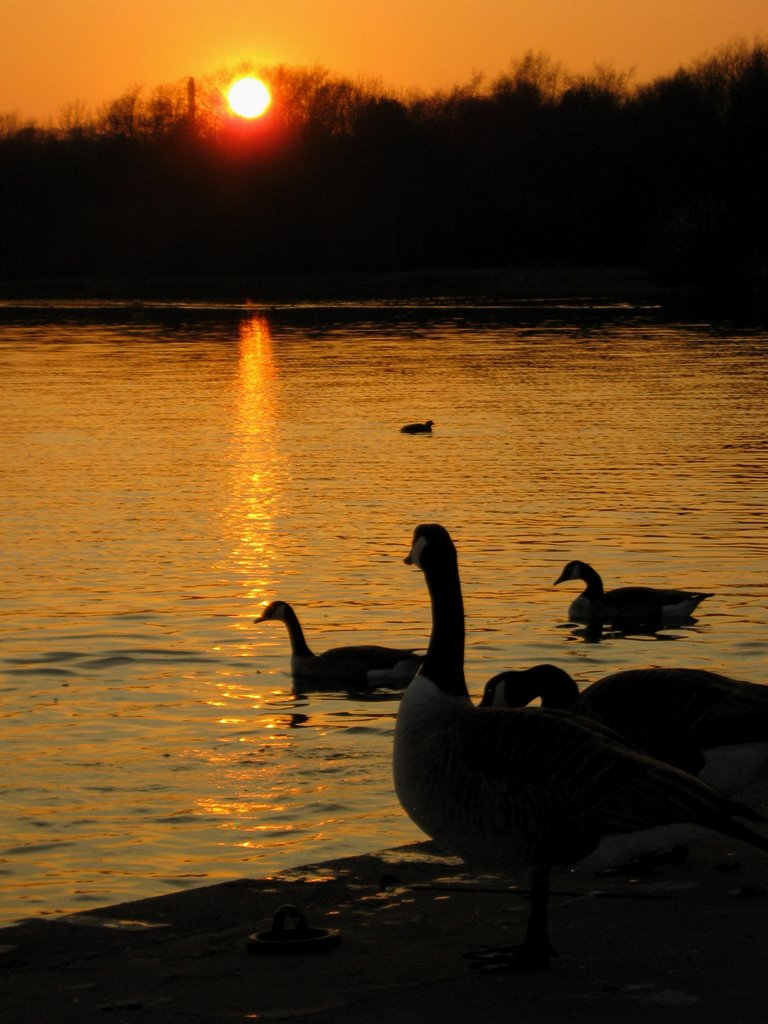 Swan pool Sunset @ Hilltop