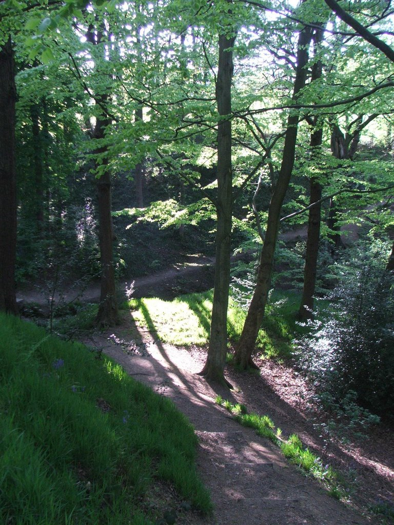 Molicar Woods, Farnley Tyas