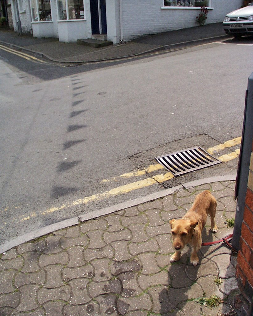 Street corners, road and small dog tied to lamp post. Hay Festival 2001, Hay-on-Wye, Powys, Wales