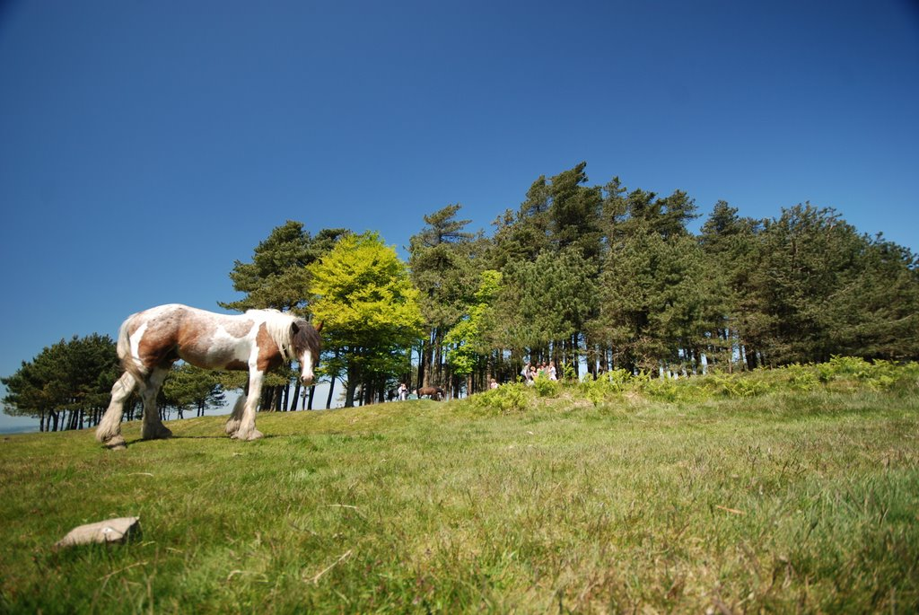 Ponies On May Hill
