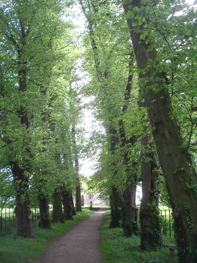 Calke Abbey - lime tree avenue