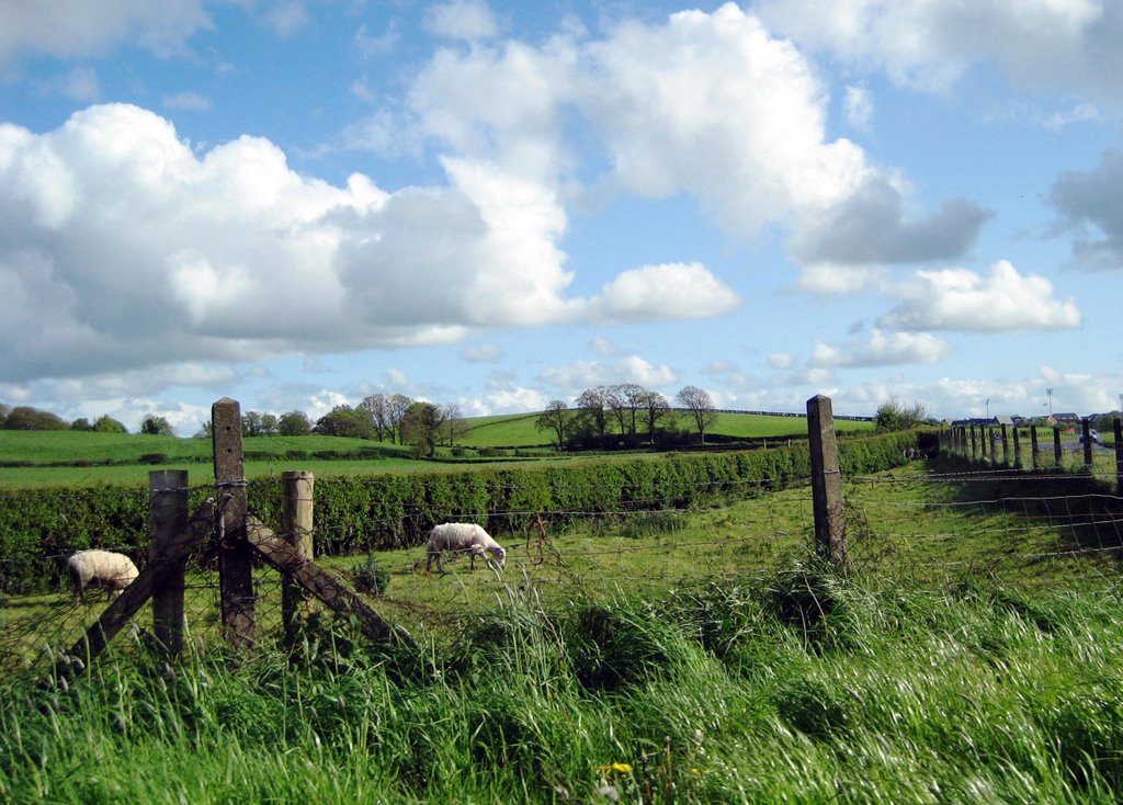Irish Countryside Omagh Co Tyrone