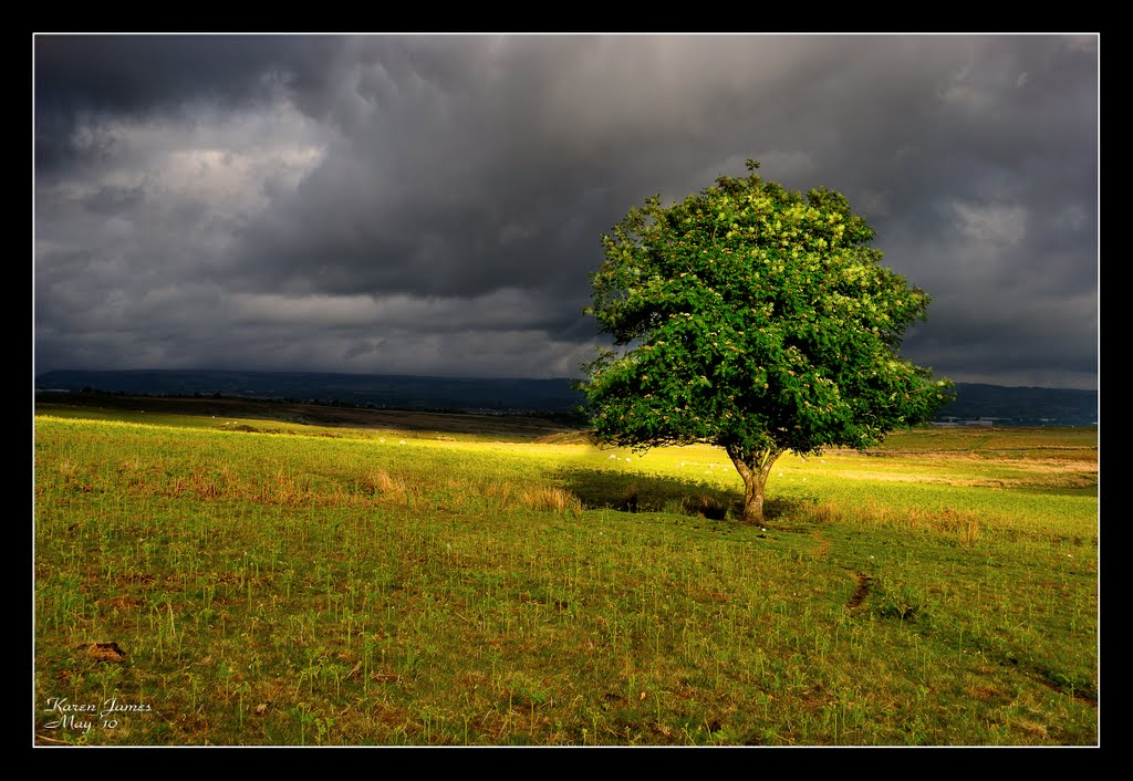 Thunderous Skies and a Lonely Tree