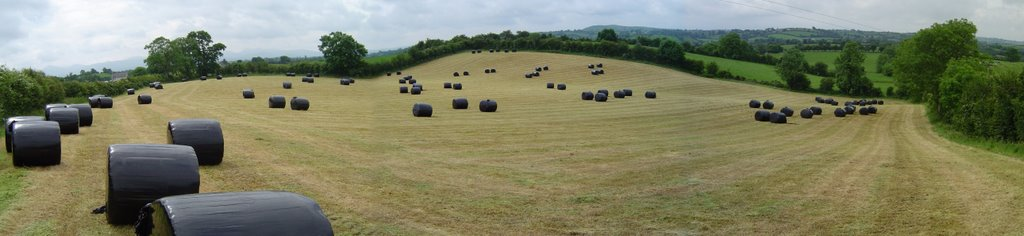 Field of wrapped round bales Katesbridge