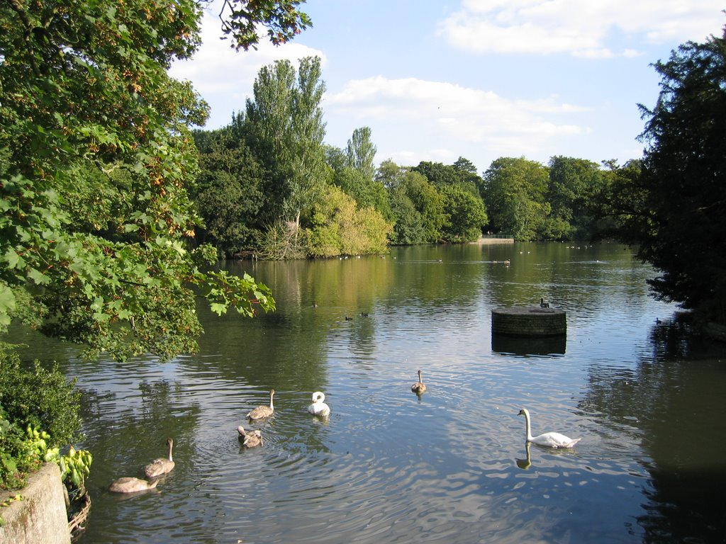 Lake with Swans, Kelsey Park