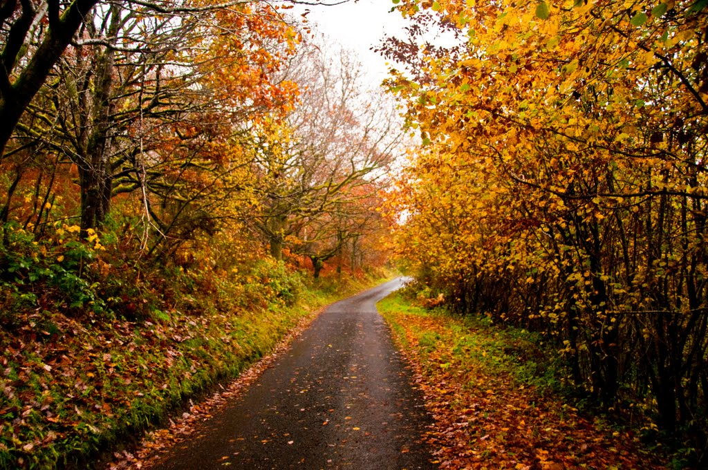 Autumn scene on a country lane