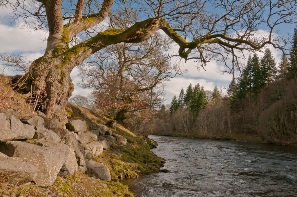 River Tweed at Yair