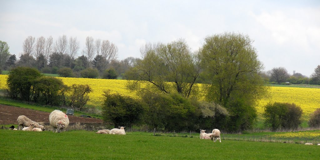 The colours of Spring ,a view from Cotesbach village Churchyard.