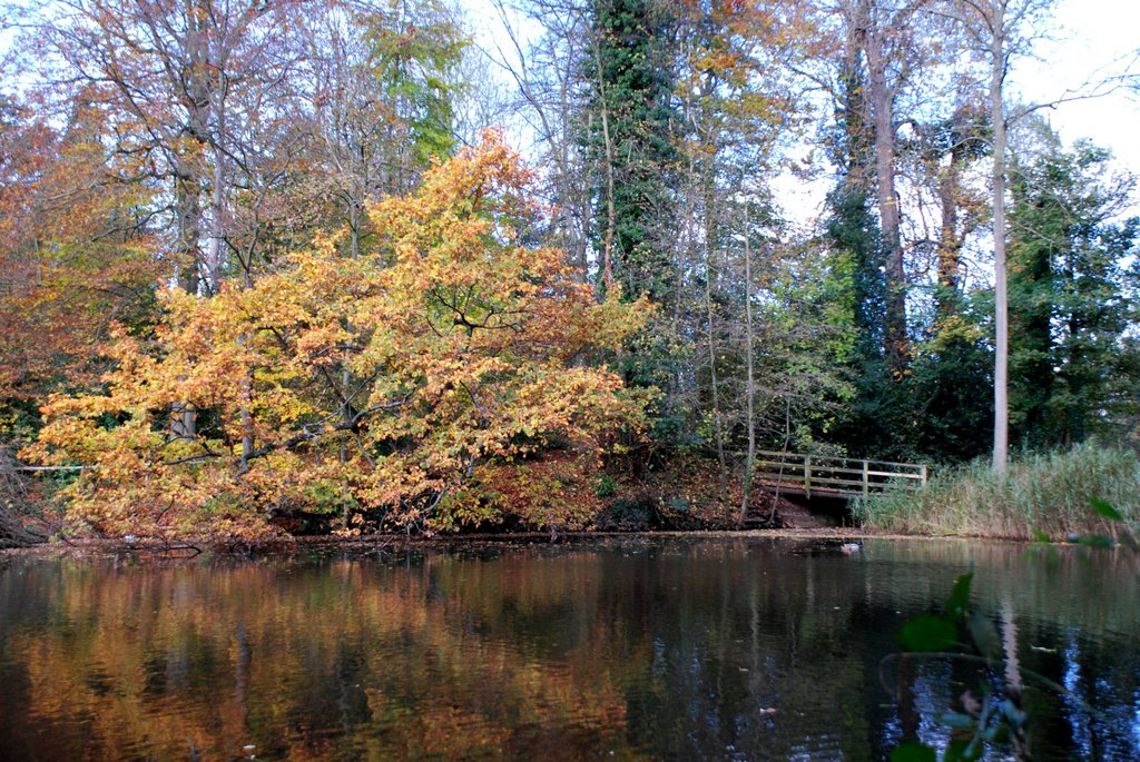 Newent Lake In Autumn