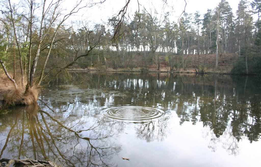 Ripples in the Oval Pond, Ufton Woods