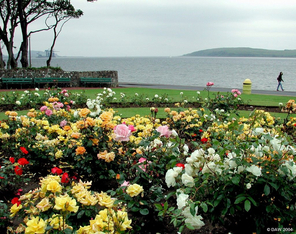 Broomfields Rose Garden, Largs, Great Cumbrae in distance